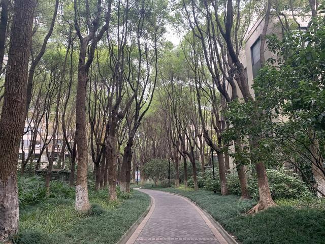 中鹰黑森林